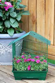 planting flowers in a birdcage is a quick and easy diy gardening project this birdcage