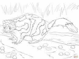 Small Picture Colouring For Kids Baby Skunk Coloring Page Boy Coloring Pages Az