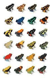 Image Result For Frog Identification Chart Poison Dart