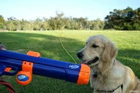 dog ball launcher dog ball launcher dog ball launcher machine you dog ball launcher