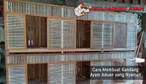 Kandang atau box ayam bangkok dengan 8 kamar semuanya dua tingkat 4 kamar di tingkat atas dan 4 kamar bagian bawah. Cara Membuat Kandang Ayam Aduan Yang Nyaman Sabung Ayam Online Kandang Ayam Desain Kandang Ayam Ayam