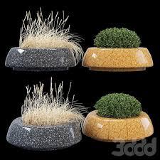 bellitalia, самшит, зелень, куст, buxus, трава, wild grass, колос ...