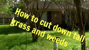 cut down tall grass and weeds
