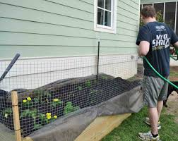 flowers ideas for review dog garden keep fence to keep dogs out of flower beds dog