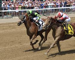 Image result for 2 thoroughbreds getting close to finish line pictures