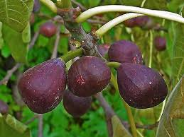 Recommended Fruit Tree Varieties For Different Regions Of TexasFruit Trees For Central Texas