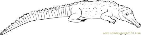 Small Picture Snouted Crocodile Coloring Page Free Crocodile Coloring Pages