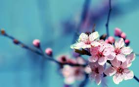 flower reality flower wallpapers