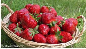 Image result for old fashioned strawberries