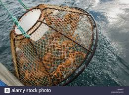 Image result for commercial crabbing