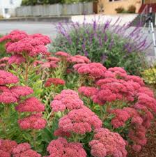 Small Picture Images About Flowers And Gardens On Pinterest Flower Beds Bed