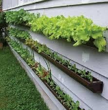 Small Picture Garden Design Garden Design with Get Growing Organic Gardening
