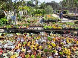 garden botanical gardens encinitas fresh late to the party