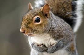 Protecting Your Fruit Trees From Wildlife  Hot Sweet Spicy RecipesHow To Protect Your Fruit Trees From Squirrels