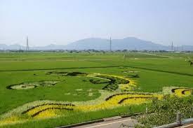 穀倉 地帯