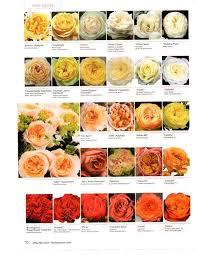 Flower Allie Garden Rose Chart 2 Flower Decorations