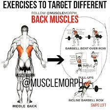 Back Muscles Exercises Weighteasyloss Com Sport And