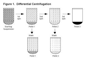 G To Rpm Conversion Chart Basics Of Centrifugation From Cole Parmer
