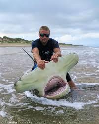 great hammerhead shark caught. Brilliant Hammerhead Corpus Christi Resident Eric Ozolins Caught This Massive 13footlong  Greater Hammerhead Shark To Great Hammerhead Shark Caught