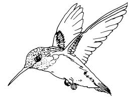 Small Picture 37 best Birds images on Pinterest Coloring Coloring pages for