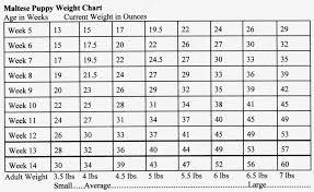Mastiff Height Chart Cane Corso Growth Chart Goldenacresdogs Com