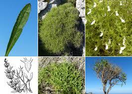Stachys glutinosa L. - Portale sulla flora del Parco Nazionale dell ...