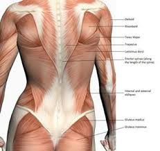 For The Back These Look Easy Enough For Right Now And Can