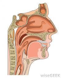 for maxillo surgery