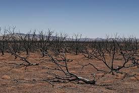 essay on drought essay california drought
