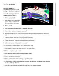 previous ib exam essay questions membranes cell division use the cell membrane