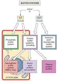Electrolyte Fluid Balance Fluid Electrolytes