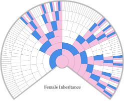 X Chromosome Inheritance Chart Female X Dna Inheritance Chart Unlocking The Genealogical