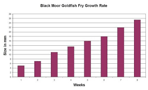 Goldfish Feeding Chart Goldfish Growth Rates Depend On Food Space And Environment