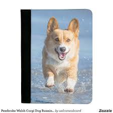 Pembroke Welsh Corgi Dog Running On The ...
