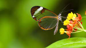 4K Butterfly Wallpapers - Top Free 4K ...