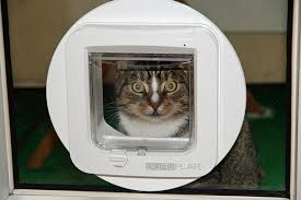 cat flap in glass door