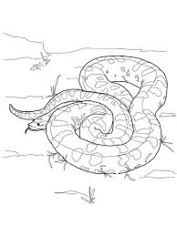 Small Picture Green Anaconda coloring page Free Printable Coloring Pages