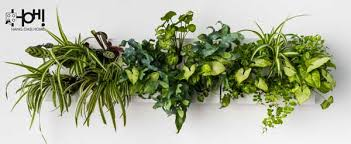 indoor vertical wall planter with