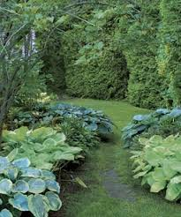 Small Picture 529 best Hostas and ferns images on Pinterest Garden ideas