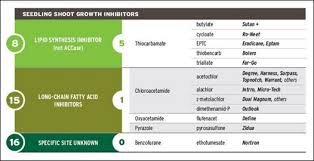 Herbicide Groups Chart Herbicide Injury Diagnosis For Corn Seedlings At Emergence