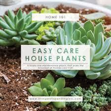 low maintenance houseplants easy care house plants indoor gardening best starter plants