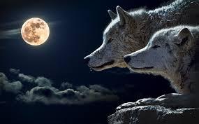 狼と月の動物壁紙