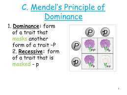 principle of dominance ppt c mendels principle of dominance powerpoint