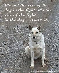 Dog Quotes Inspirational Beauteous Dog Quotes Inspirational Quotes About Dog