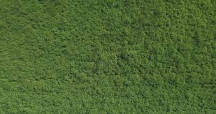 Grass field aerial Meadow 4k Aerial Drone Footage Moving Forward Slowly Over Long Green Grass Field Hi Res 89455416 Pond5 4k Aerial Drone Footage Moving Forward Slowly Over Long Green Grass
