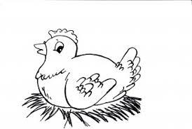 Kippen Broedende Kip Kleurplaten