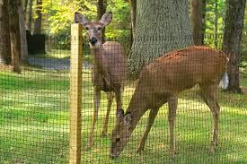 how to keep deer out of garden deer netting keeping deer out of the garden