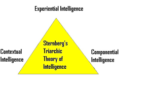 Sternberg Intelligence Theories Of Intelligence And Sex Differences In Intelligence
