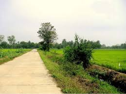 Concrete Paved Roadway Provides Easy Access To Todays Paddy Field