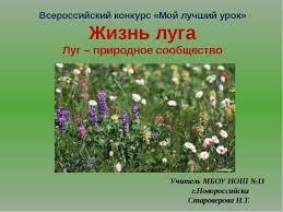 Урок окружающего мира в классе Жизнь луга Луг природное  Всероссийский конкурс Мой лучший урок Жизнь луга Луг природное сообщество